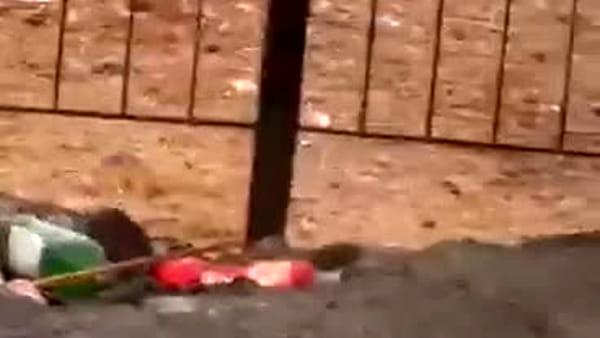 Lettori: Ratti scorrazzano tra la spazzatura a Trappeto nord | VIDEO