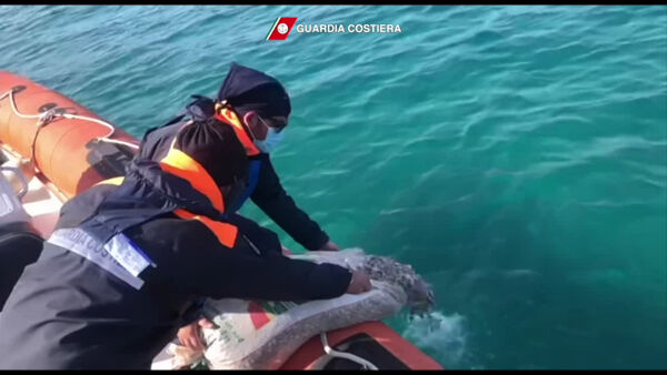 Pesca di frodo, la guardia costiera sequestra 100 chili di telline