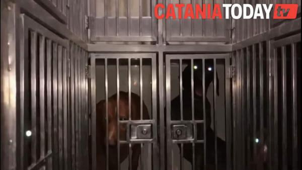 16 cuccioli stipati in un furgone pronti per essere venduti
