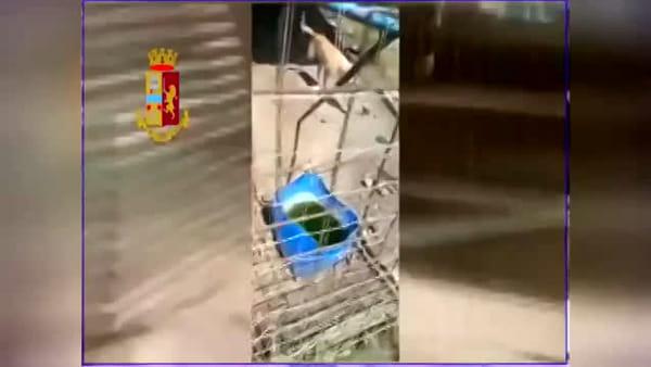 La polizia scopre un canile lager con animali senza cibo | Video