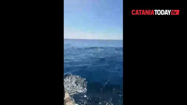 Delfini seguono una barca di pescatori a San Giovanni Li Cuti | Video