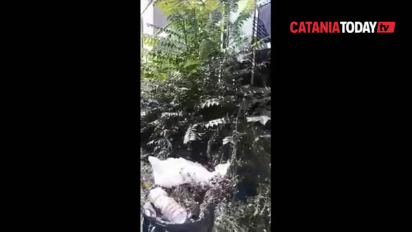 Erba alta e degrado tra le tombe del cimitero di Catania | Video