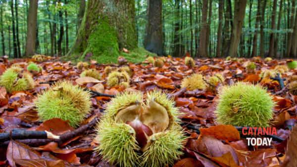 Trekking e castagne nel bosco dell'Etna