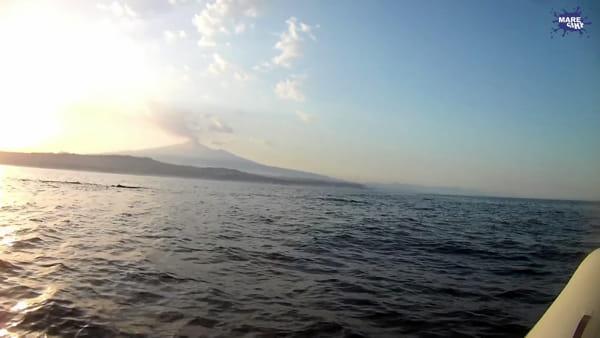 Un gruppo di capodogli avvistato nel golfo di Catania | Video