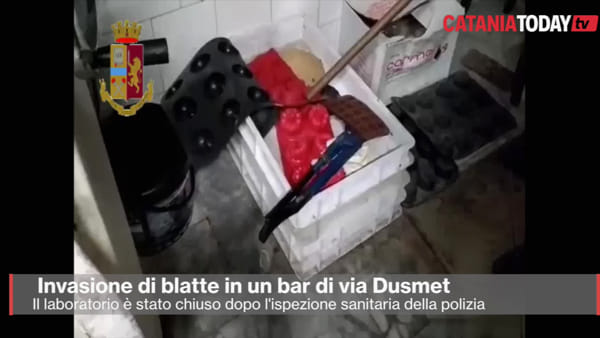 "Blatte nel laboratorio del bar ""Etoile d'Or"" di via Dusmet 